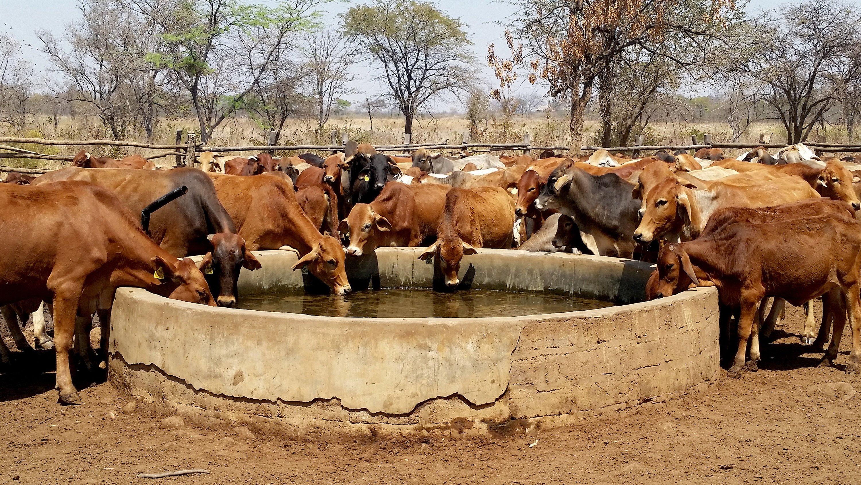 养牛资讯丨一起来看看最近发生了哪些养牛新闻吧